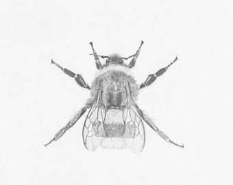Bee_one- Original Pencil Drawing, wildlife art