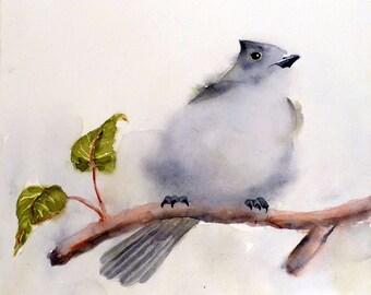 Woodland birds, Art Prints, Nature, Bird Prints, Oak Titmouse, Song bird, Fine art, watercolor, Grey painting, Natural history, art print