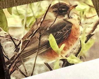Robin Note Card with Envelope   Robin   Birds   Blank Note Card