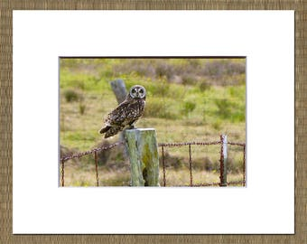 Pueo Matted Photo, Owl Photo, Hawaii Matted Photo, Big Island Matted Photo, Hawaiian Owl, Bird Photo