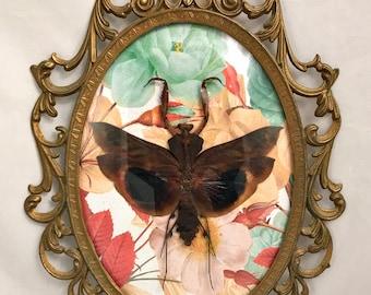 Large Bark Mantis Antique Frame