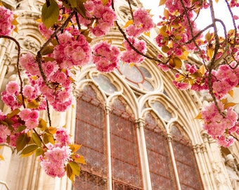 Paris flower photo, spring photography, cherry blossoms, Notre Dame Cathedral, fine art Paris photography, blossoms in Paris, wall decor