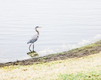 Blue Heron on the Lake Print