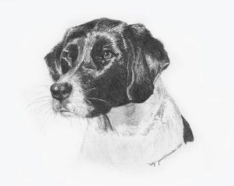 """Dog Stationary, """"Cody"""""""