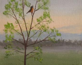 Spring painting, robin singing at sunrise.
