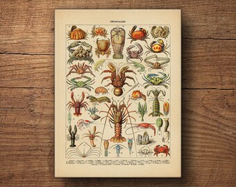 Lobster Print, Beach Wall Art, Scientific Illustration, Coastal Art, Vintage Art, Canvas Prints, Nautical Prints, Beach Art, Crab Decor