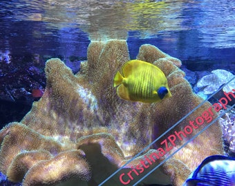 Butterfly Fish & Coral