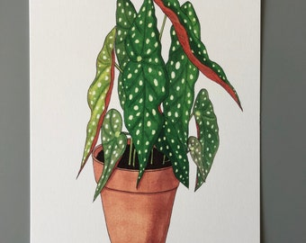 Postcard 'dots begonia'