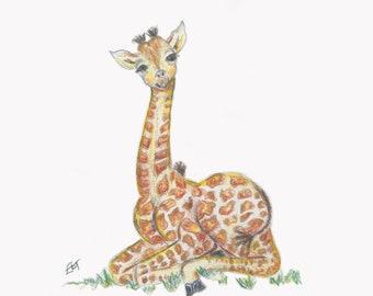 Baby Giraffe in Grass