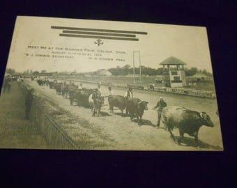 1908 Photo Meet me at the Banner Fair, Celina, Ohio , Steer Show