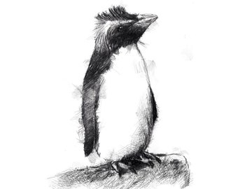 Rockhopper penguin | Limited edition fine art print from original drawing. Free shipping.