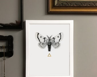 Moth to the Flame Archival Pigment Print of Original Graphite Drawing with 24kt Gold Leaf Embellish in White Frame