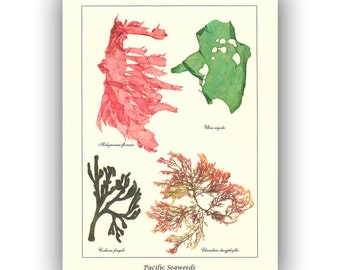Seaweed art, pressed natural  seaweeds, Pacific Seaweeds II, Original Sea weed Pressing, Botanical art, beach cottage decor, Victorian art