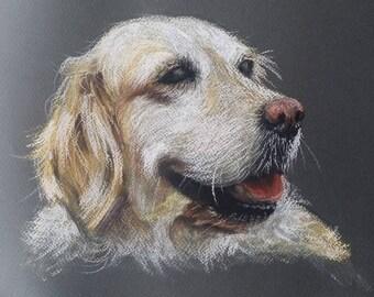 Custom Portraits. Animal/ Pet protraits. Horse, dog and cat.