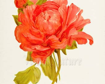 Tree Peony Flower Art Print, Peony Botanical Art Print, Flower Wall Art, Flower Print, Floral Print, Home Decor, orange, salmon