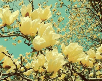 Yellow Magnolia - Nature Art - Flower Tree Art - Flower and Sky Art - Spring Flower - Wall Decor - Nature Photography - Magnolia Photograph