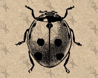 Beetle Ladybug Image Instant Download Digital printable vintage picture clipart graphic scrapbooking transfer burlap tote towel HQ 300dpi
