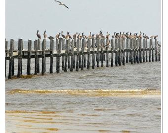 Pelicans Perched Photograph