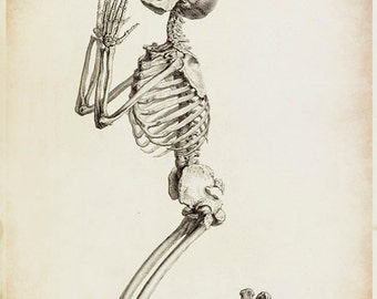 Skeleton Art - Skeleton Drawing - Antique Medical - Antique Scientific - Bone Art - Anatomy Drawing