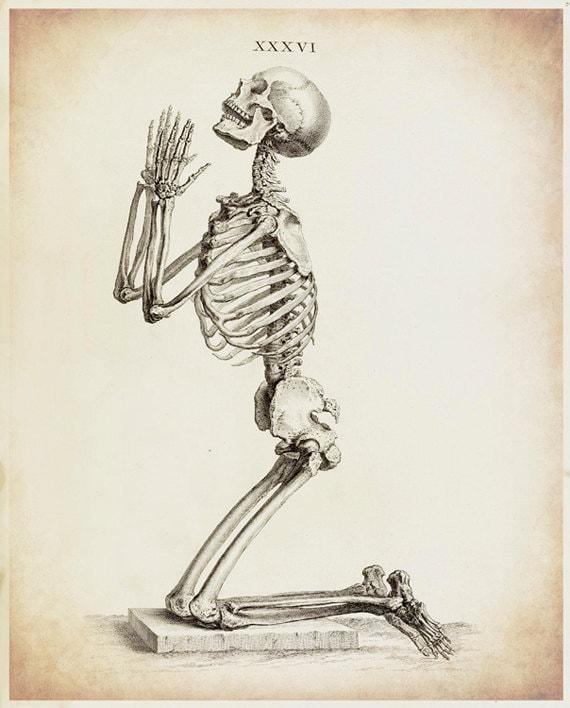 Skeleton Art Skeleton Drawing Antique Medical Antique  Skeleton Art Sk...