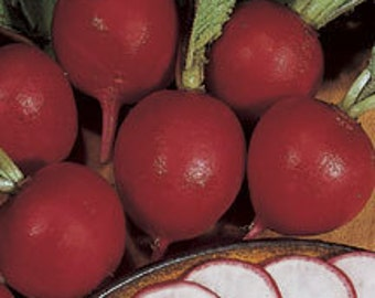 German Giant Heirloom Radish Seeds  Non-GMO Naturally Grown Open Pollinated Gardening