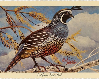 California State Bird - California Valley Quail Vintage Postcard Signed Artist Ken Haag (unused)