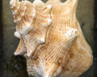 Grandma's Shell A Signed Fine Art Photograph