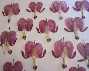 Dried Pressed Flowers for Crafting - Real Pink Bleeding Hearts