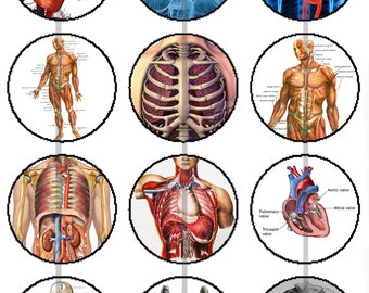"""1"""" Inch Colored Medical Illustrations Magnets, Pins or Flatback Buttons 12 Ct."""