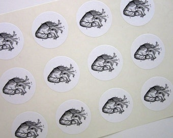 Anatomical Heart Stickers One Inch Round Seals