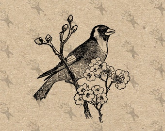 Vintage Image Bird Goldfinch Flower Instant Download Digital printable clipart graphic Transfer Paper Burlap Fabric Towel Pillow Tote 300dpi