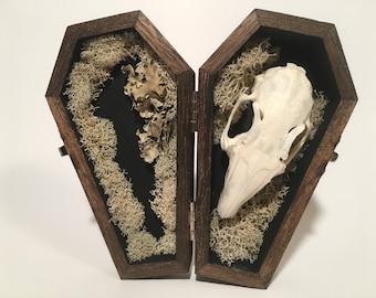 Rabbit Skull Coffin Display - Tan Colored Moss 01