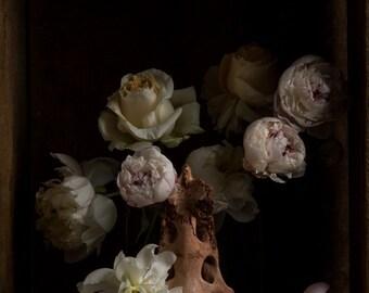 Dark Botanical studio No. 001