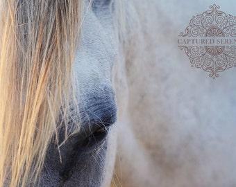 Beautiful gray-eyed white horse