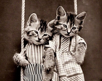 Vintage photo print kittens cats on swing antique photography pets wearing clothes in clothing photograph gift for cat lover 1920s