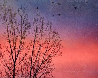 Sherbet Sky, Photography Print, Art Print