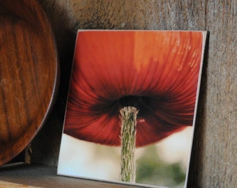Poppy Photograph Mounted on Wood