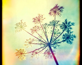 Nature photography,Cow Parsley, Wild flowers, Ttv, Vintage, Wall decor
