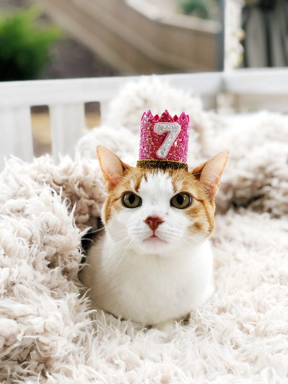 Birthday Crown || Cat Hat || Kitty Cat Birthday Crown || Crown || Animal Party || Pet Birthday Party Outfit || Cat Costume || Cat Toys