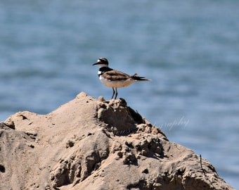 Sandpiper On Sand Hill Photo Print