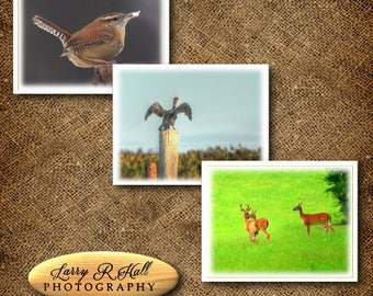 Country Birds and Deer Note Cards