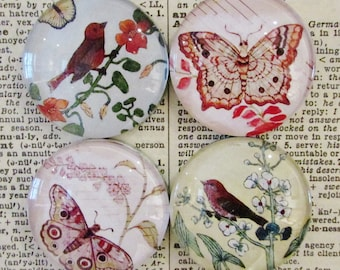 Birds & Butterflies Handcrafted Magnet - Original Art - Glass Magnet - Set of Four - Rare Earth Magnet  -  Unique Birthday Gift for Sister