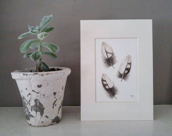 Original Woodpecker Feather Art, watercolor painting, modern decor, home decor, boho decor, natural decor, feather sketch