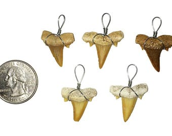 5 Wire Wrapped Fossilized Shark Teeth Pendants - Shark Tooth Fossil
