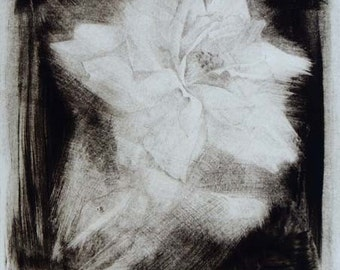 "Fine art print ""Rose"" Drypoint drawing fading rose flower black white limited edition original print"