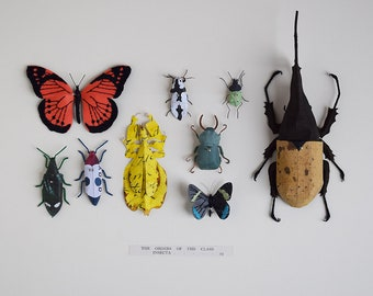 Entomology Display - Paper Insect Sculpture