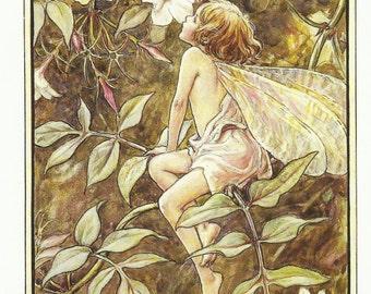 Jasmine Fairy by Cicely Mary Barker Flower Fairies Vintage Print 1995 Wall Art Nursery Decor Fairy Print Home Decor Print Fine Art