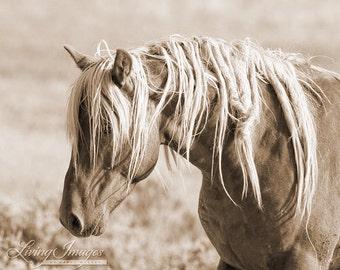 Wild Mane II - Fine Art Wild Horse Photograph - Wild Horse - Sepia - McCullough Peaks - Wild Horse - Tangled Mane