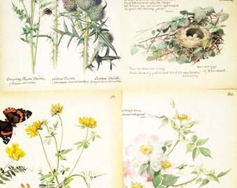 4 vintage book plate prints, botanical, wildflowers, birds, vintage pages, vintage paper ephemera, mixed media supplies, naturalist's diary