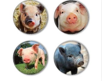 Pig magnets or pins, pig buttons, piglets, refrigerator magnets, fridge magnets, office magnets